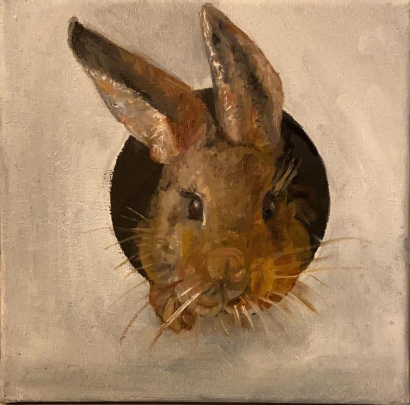 Dieren konijn 2